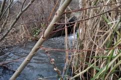 1ere campagne d'analyses de terrain - Décembre 2017 - ANR Frog - Arrivée des eaux Bassin infiltration Chassieu ( (c) ISA )