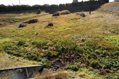 1ere campagne d'analyses de terrain - Décembre 2017 - ANR Frog - Bassin d'infiltration Grange Blanche ( (c) ISA )
